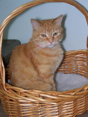 kittens basket photo