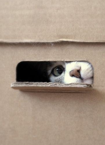 Adorable cat peeking through box window